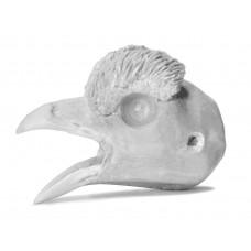 Black grouse head