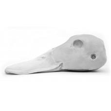 Mallard head