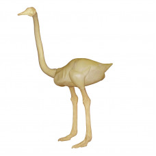 Ostrich BRD-BO-1