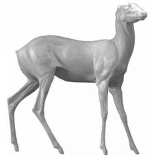 Siberian roe deer SRD-F-1