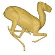 Goitered gazelle GG-F-1