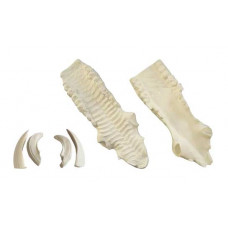Wild boar jaw set (large)