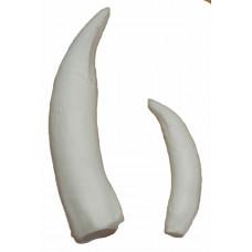 Crocodile tusk, large