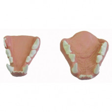 Lynx jaw set, Large, Painted