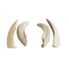 Wild boar tusks (medium)